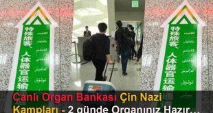 Canlı Organ Bankası Çin Nazi Kampları; 2 günde Organınız Hazır…